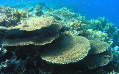 India's First 3D Printed Coral Reef