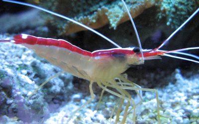 3D Printed Shrimp's Claw