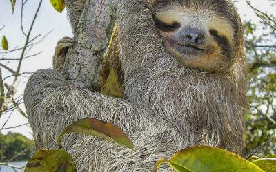 The 3D Printed Robotic Sloth Helping Environmental Conservation Efforts