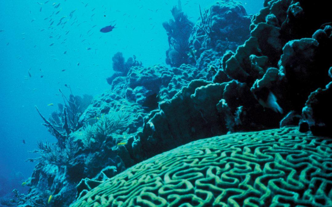 The 3D Printed Clay Tiles Restoring Hong Kong's Damaged Coral Reefs