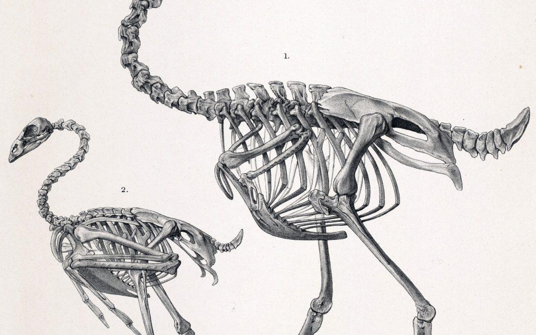 3D Printed Fossil Replicas