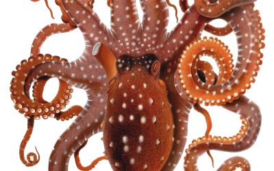 The 3D Printed Light-Responsive Material That Replicates Octopus Camouflage