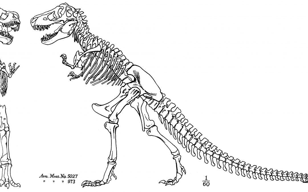 3D Printed Tyrannosaurus Rex Skeleton