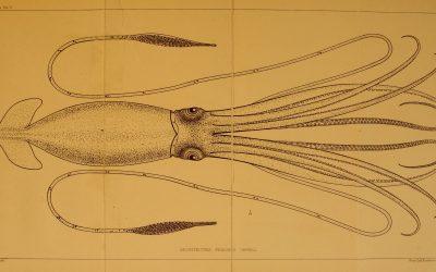 3D Printed Ancient Cephalopod Replicas